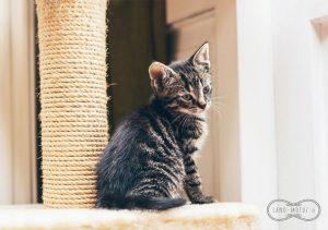 Sisalové laná - škrabadla pro kočky